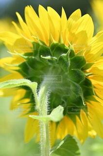 花のクローズアップの写真・画像素材[4657801]