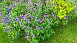 紫色の花と緑の草の写真・画像素材[4905028]