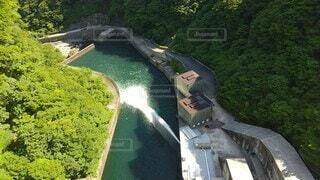 自然,鳥,屋外,湖,水,水面,樹木,ダム,五十里ダム