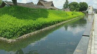 風景,空,夏,鳥,屋外,湖,川,水面,泳ぐ,草,樹木,新緑,鴨,お堀,草木,鯉,遊泳,足利学校