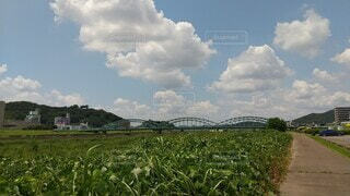 橋,レア,珍しい,アーチ橋,道路橋,中橋,3連,鋼ブレースドリブタイドアーチ