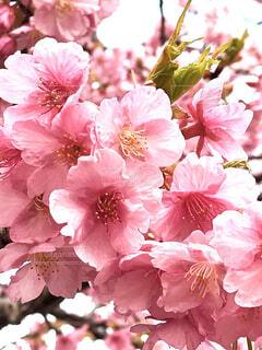 花,ピンク,草木,ブルーム,フローラ