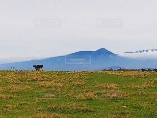 雄大な山を背景にした高原牧場と牛の写真・画像素材[3971345]
