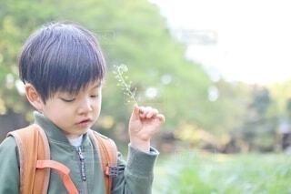 ナズナで遊ぶ男の子の写真・画像素材[4339062]