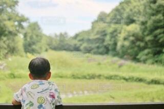 田んぼ風景を眺めるの写真・画像素材[4644046]