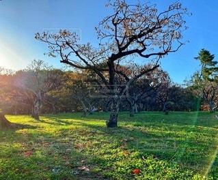 草原の木の写真・画像素材[3983599]
