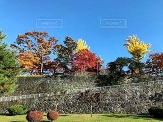 秋晴れに映える、岩手公園の紅葉の写真・画像素材[4008586]