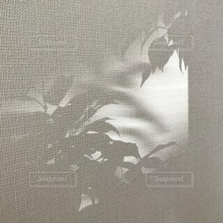 壁に写り込んだ植物の写真・画像素材[4018567]