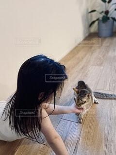 女の子に甘える猫の写真・画像素材[4035261]