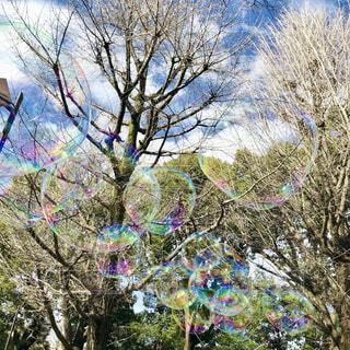 冬空に浮かぶ大きなシャボン玉の写真・画像素材[4037934]