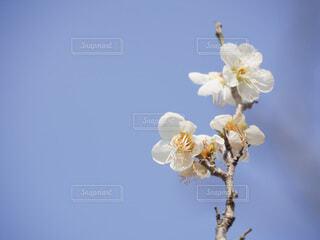 空,花,春,白,草木,ブロッサム