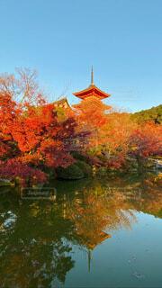 秋の清水の写真・画像素材[3989618]