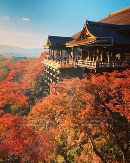 秋の清水の写真・画像素材[3989619]