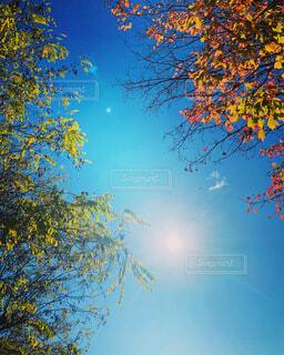 Chitchatの写真・画像素材[3989620]