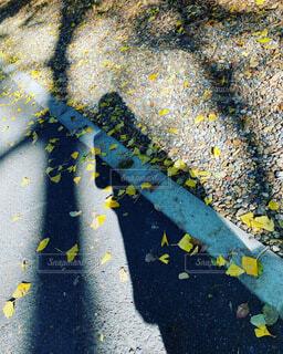 木のクローズアップの写真・画像素材[3989623]