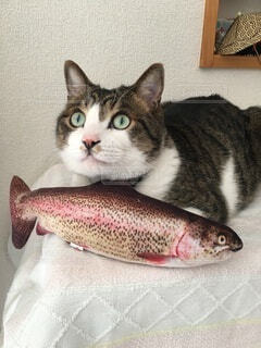魚の上に横たわる猫の写真・画像素材[4111496]