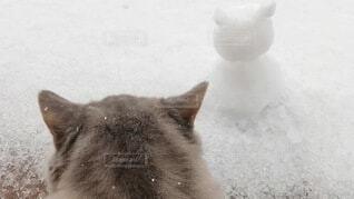猫と猫耳雪だるまの写真・画像素材[3996420]