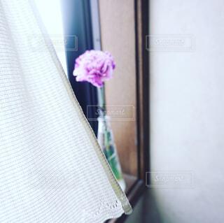 窓辺の一輪のカーネーションの写真・画像素材[4354700]