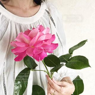 大きなバラを母にプレゼントの写真・画像素材[4403932]