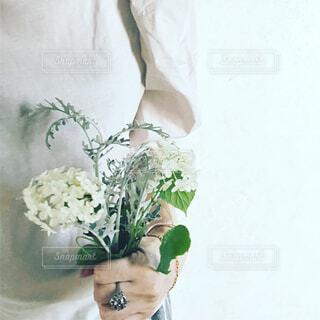 庭の白い紫陽花の写真・画像素材[4557893]