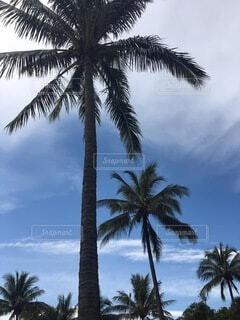 ヤシの木のあるビーチの写真・画像素材[3998177]