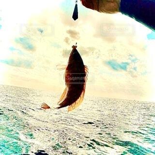 釣り上げられた魚の写真・画像素材[3998550]