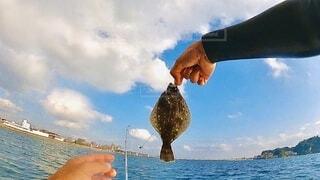 江の島沖でヒラメの写真・画像素材[4002349]
