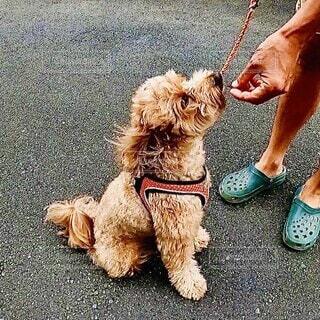 お散歩中におやつを貰う犬の写真・画像素材[4006055]