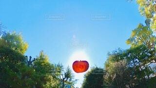 太陽と重なり、浮いて見えるりんごの写真・画像素材[4025670]