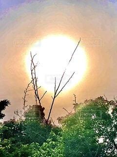 自然,風景,空,屋外,太陽,朝日,緑,植物,青空,日差し,光,樹木,正月,ブルー,お正月,日の出,湘南,新年,初日の出,nature