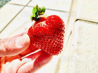 食べ物,スイーツ,赤,いちご,フルーツ,果物,甘い,ベリー,美味しい,レッド,収穫,ストロベリー,獲れたて,紙,イチゴ,多く