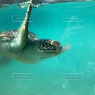 海の中のカメさんの写真・画像素材[4909860]