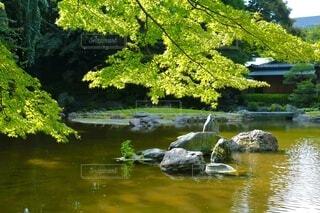 様々な緑が映える池の写真・画像素材[4004189]