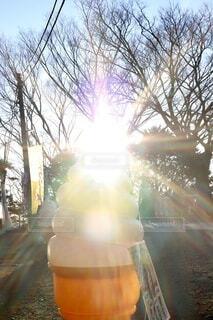 空,屋外,太陽,朝日,樹木,めでたい,正月,ソフトクリーム,寒い,お正月,日の出,フレア,明るい,おもしろ,シュール,新年,初日の出