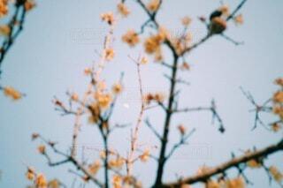 空,花,屋外,夕暮れ,月,隙間,小さい,半月,草木