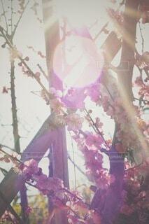 大胆にゴースト出た梅の写真の写真・画像素材[4192689]