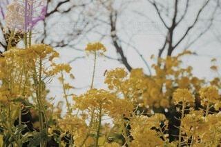 自然,空,花,幻想的,葉,菜の花,夕方,景色,樹木,蜂,寒い,ミツバチ,オールドレンズ,おしゃれ,2月