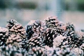 自然,綺麗,景色,松ぼっくり,雰囲気,不思議,集合,草木,おしゃれ,2月,松かさ,天然素材