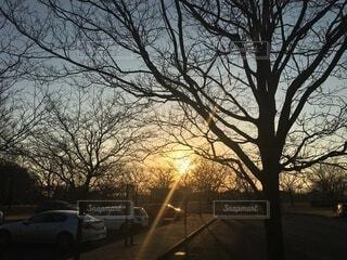 冬,太陽,夕暮れ,幻想的,枯れ木,樹木,冬空,射光,オレンジの太陽