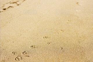猫,自然,屋外,砂,ビーチ,水面,海岸,足跡,虫,地面,フィルムカメラ