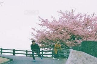 桜の写真・画像素材[4238519]