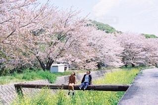 桜とわれら。の写真・画像素材[4436934]