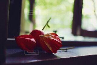 自然,花,森林,屋内,緑,赤,窓,テーブル,鬼灯,草木