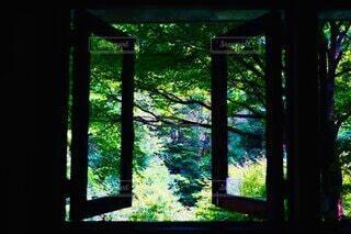 自然,風景,森林,屋内,森,緑,窓,景色,樹木,ダイニングテーブル