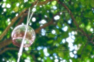 自然,風景,景色,樹木,風鈴,玉ボケ,ドロップ,バブル,液滴