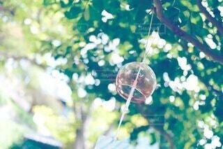 自然,風景,森林,緑,景色,樹木,風鈴,玉ボケ,バブル