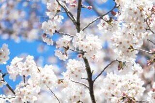 咲き誇るの写真・画像素材[4184766]