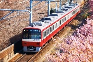 風景,桜,屋外,電車,景色,旅行,トラック,鉄道,車両,レール,陸上車両