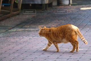お散歩日和の写真・画像素材[4210707]