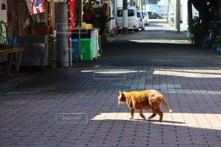 お散歩日和の写真・画像素材[4210708]